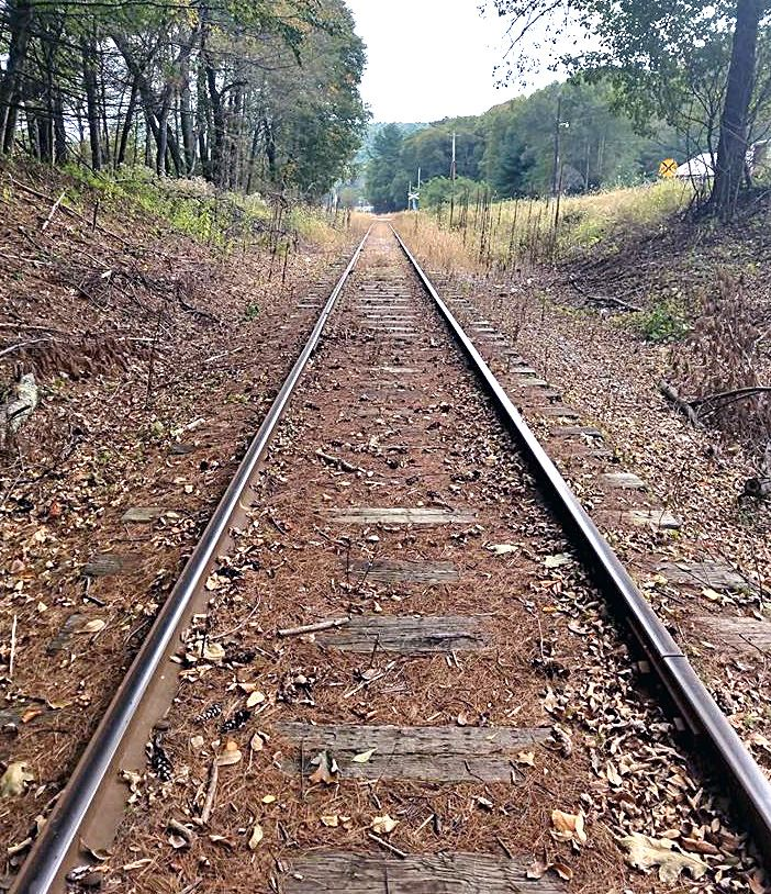 Railroad tracks emerging from a wooded area to a rural road crossing in fall.
