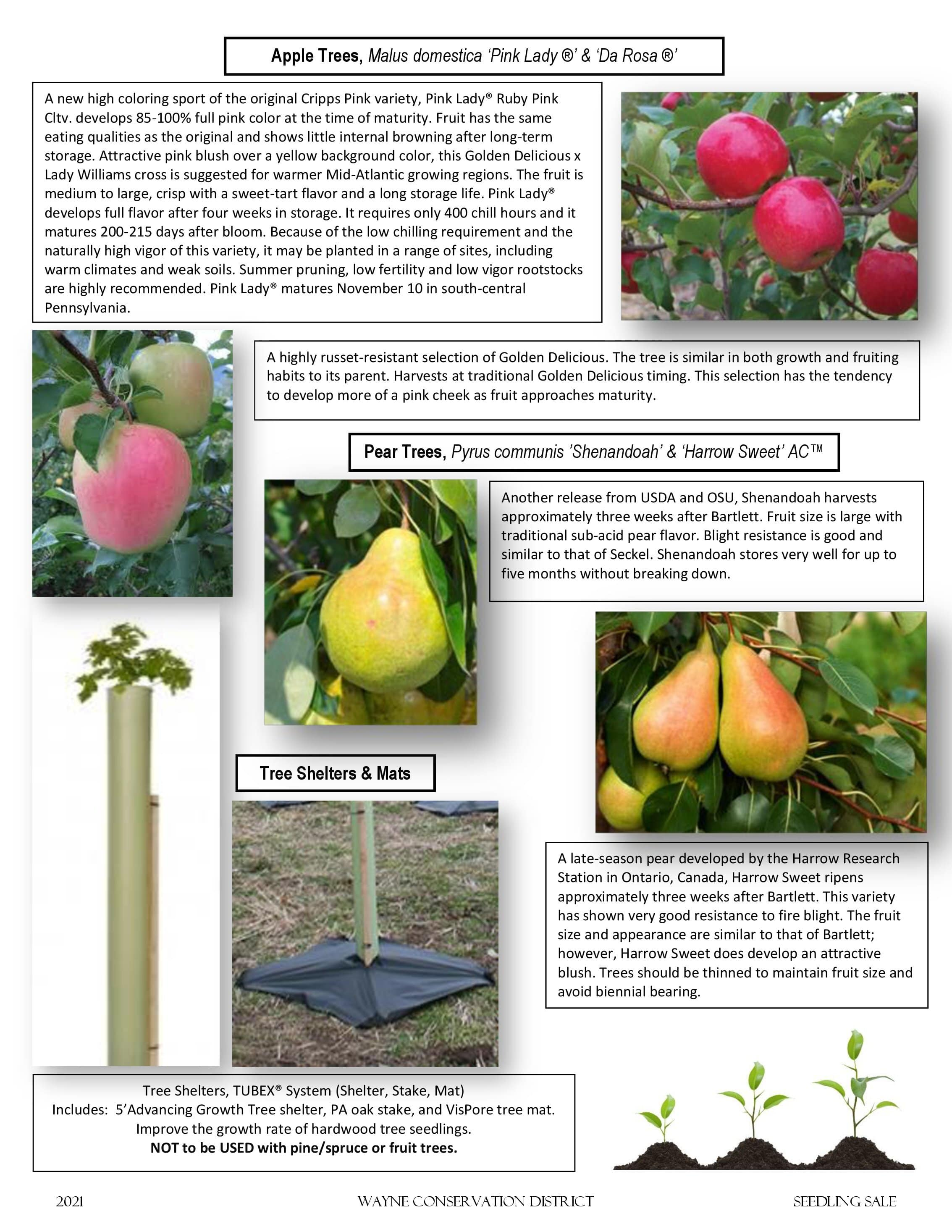 Page 3 of the 2021 Seedling Sale Flyer featuring apple and pear trees and tree shelters.