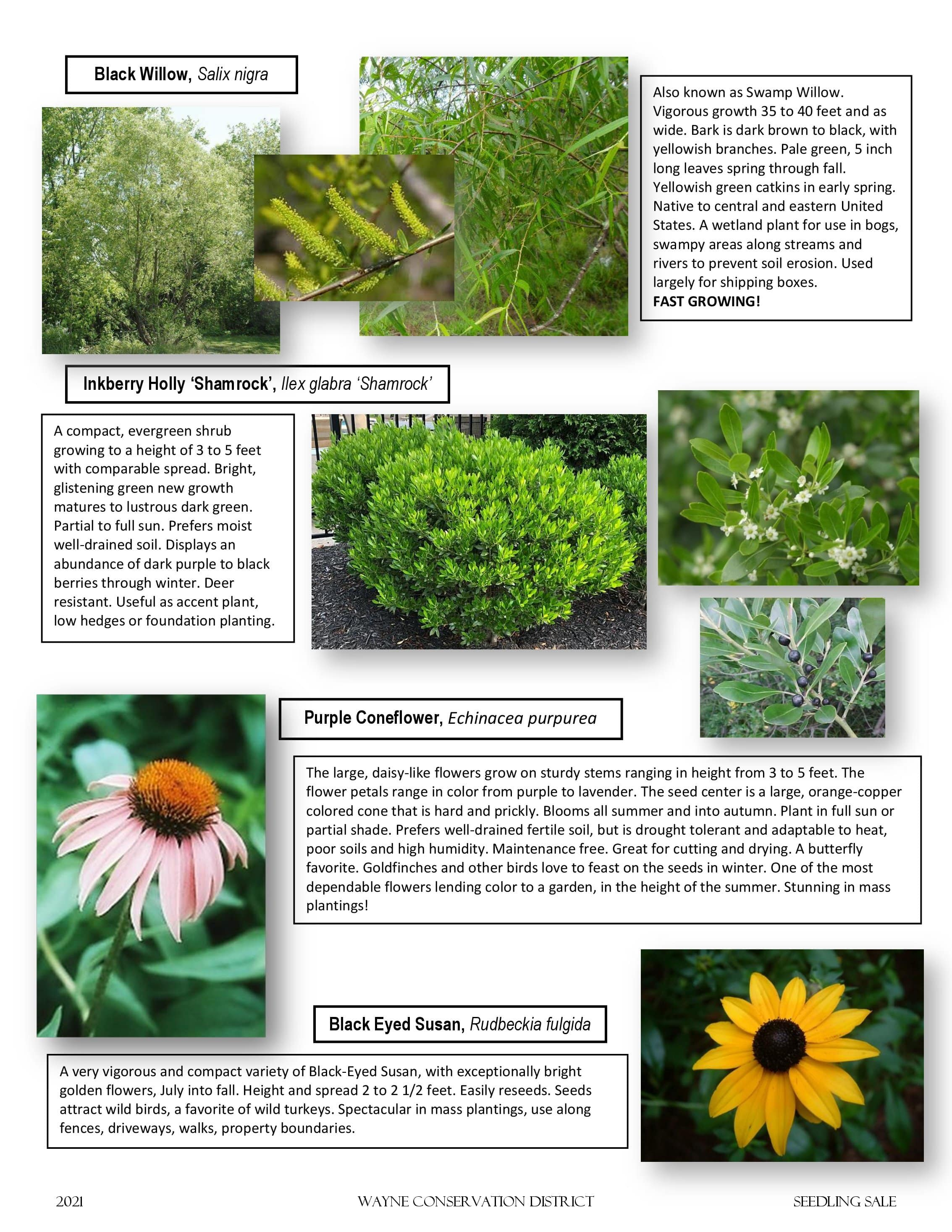 Page 2 of the 2021 Seedling Sale Flyer featuring ornamentals and annuals.